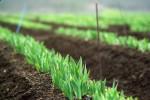 Drożeją tylko grunty rolne